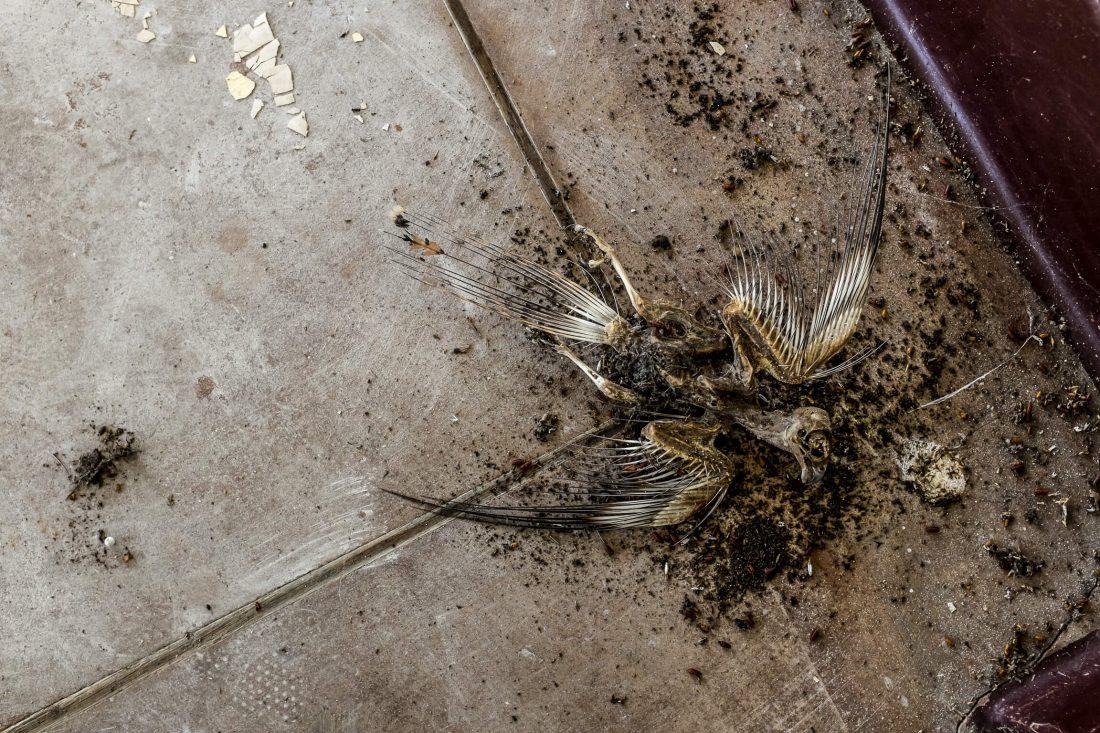 carcasse d'oiseau mort en urbex
